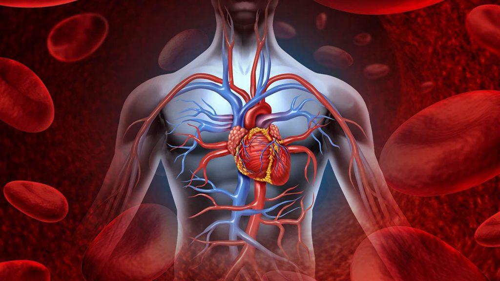 Flujo sanguíneo en el sistema circulatorio