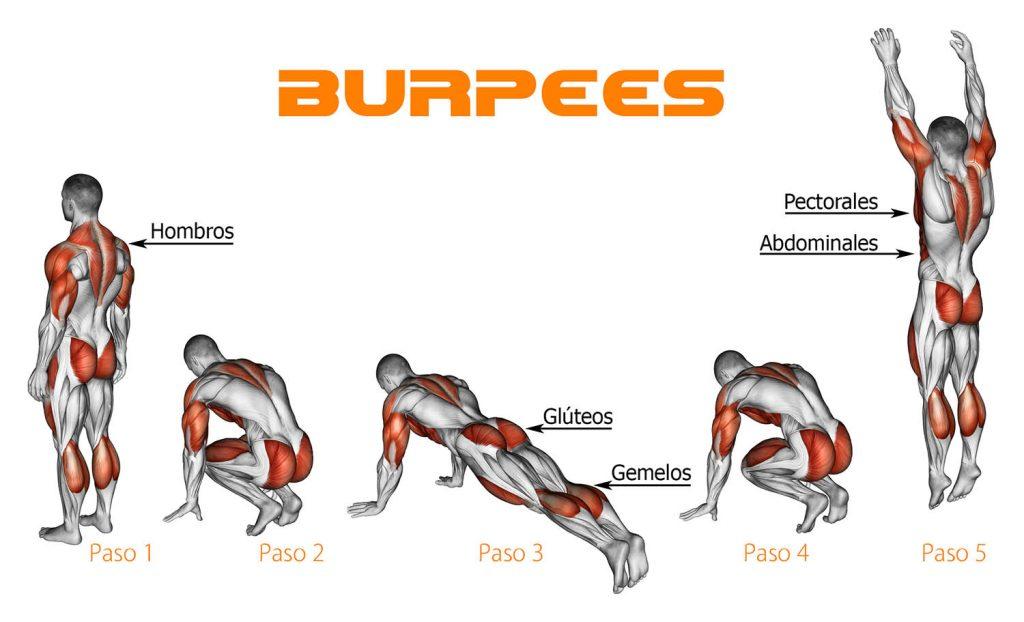 Músculos ejercitados en Burpees