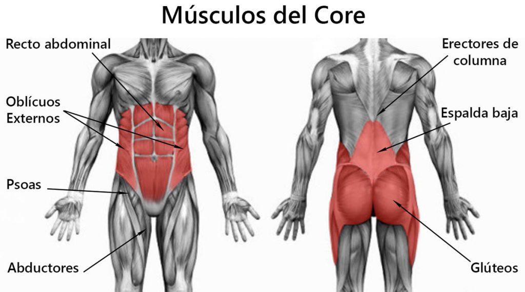 Músculos del core