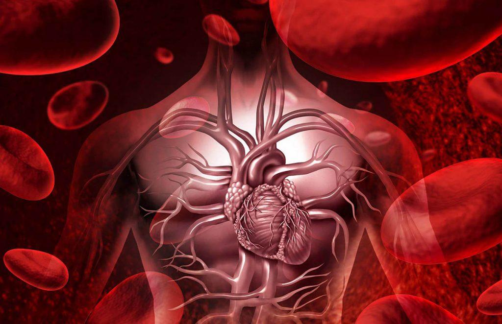 Deshidratación en el sistema sanguíneo